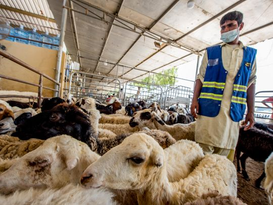 The Cattle Market in Al Qusais during the Eid - 30/7/2020