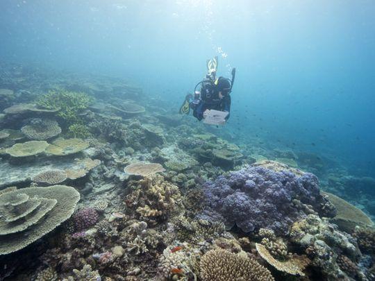 reef-1627055205771