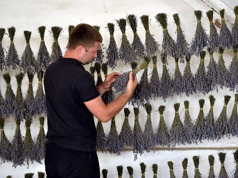 Moldova lavander gallery