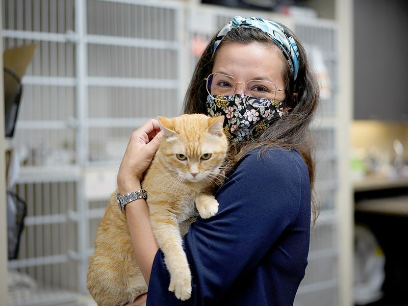 Wild Rose Cat clinic in Calgary