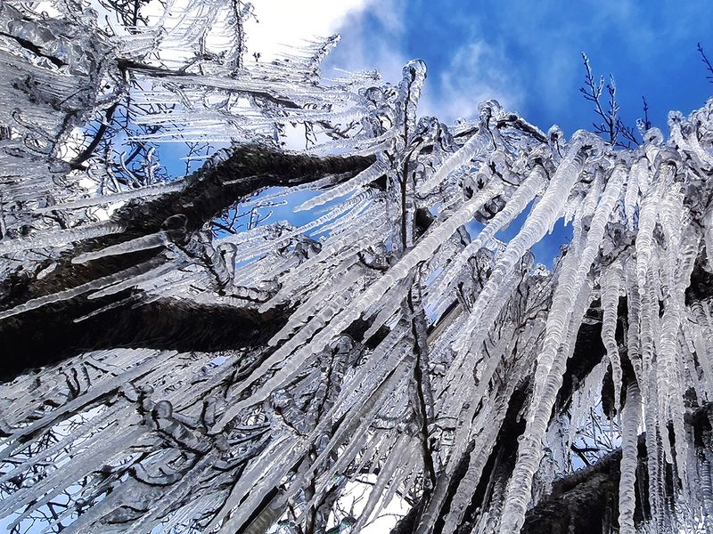 Ice blankets trees at dawn during a cold snap in Sao Joaquim, Brazil.
