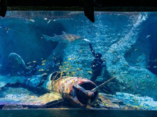 NAT_210802 Aquarium Shark1-1627901542332