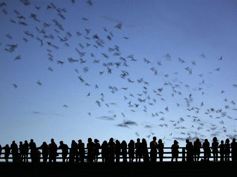 20210826 bats in texas