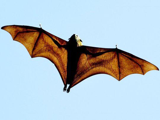 20210826 bats