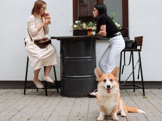 dog restaurant cafe