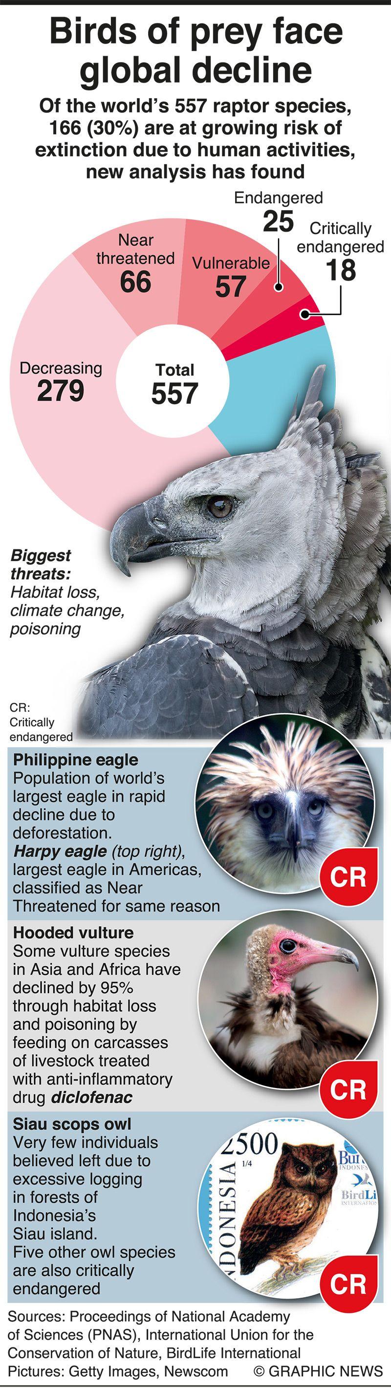 20201001 birds of prey