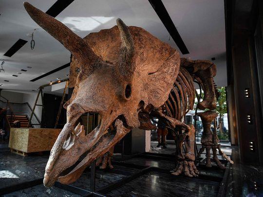 20210901 triceratops