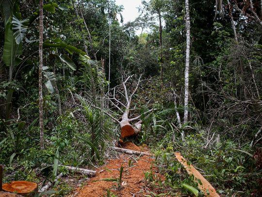 20210902 fallen tree