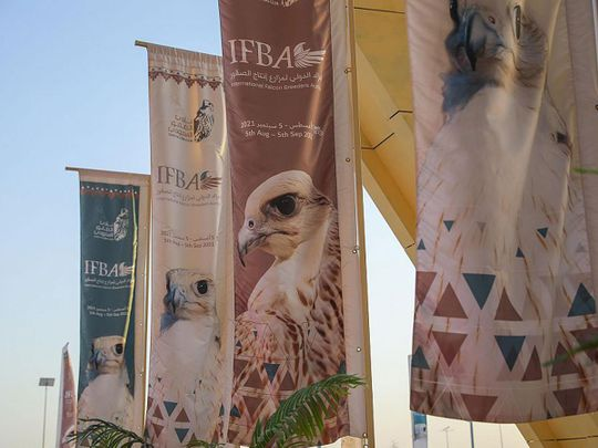 Saudi falcon