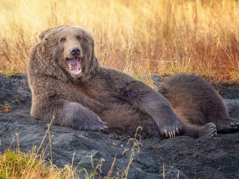 http___cdn.cnn.com_cnnnext_dam_assets_210901131203-17-comedy-wildlife-photography-awards-2021-1631026931558