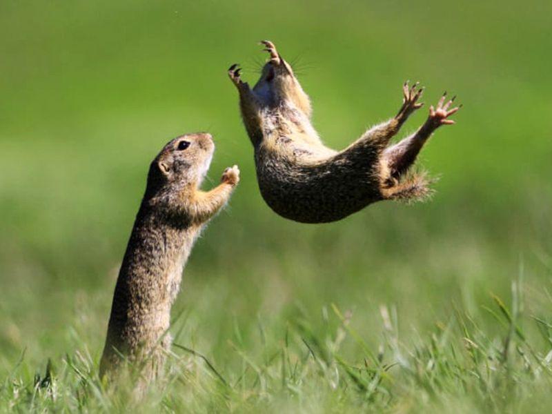 http___cdn.cnn.com_cnnnext_dam_assets_210901135746-16-comedy-wildlife-photography-awards-2021-1631026929611