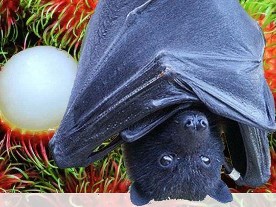 Bat Nipah Virus Kerala