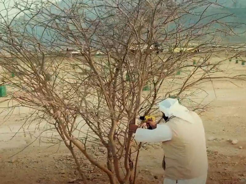 Abu Dhabi tree