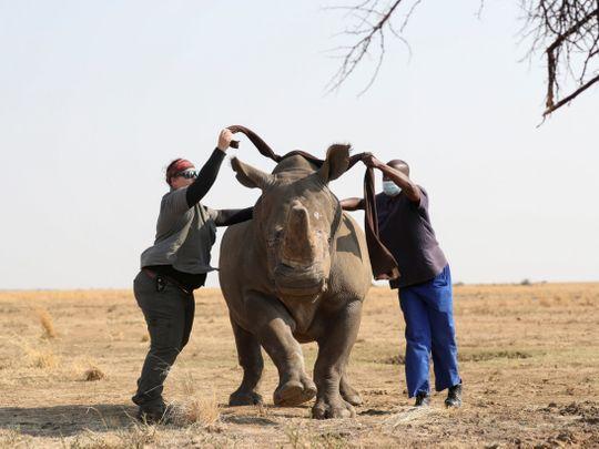 rhino-1631869003202