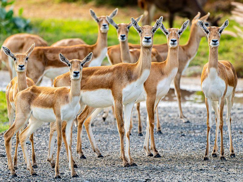 Dubai Safari Park 2021