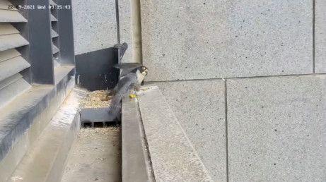 australia bird-1632313958806