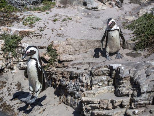 penguins-1632309889792