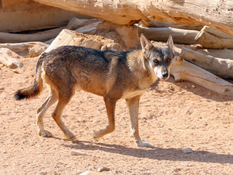 Dubai Safari Park has new species - these are stock images