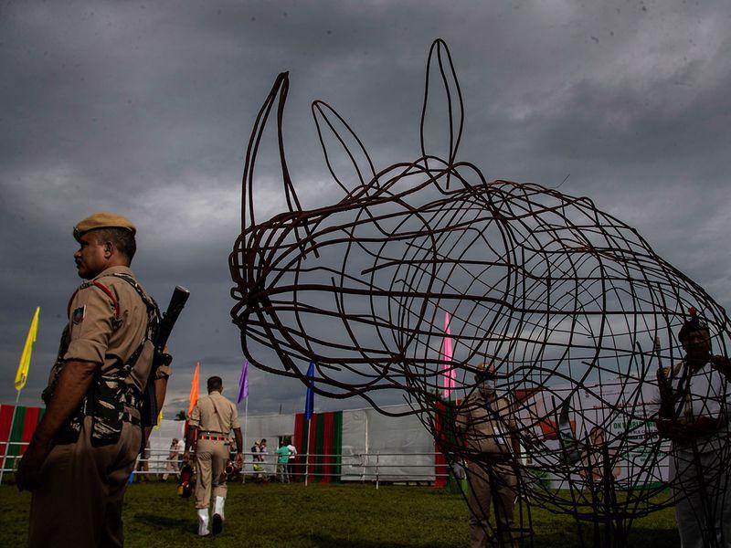 Rhino horns gallery