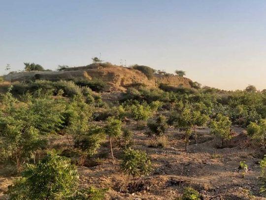 Karachi urban forest Kidney Hill Park