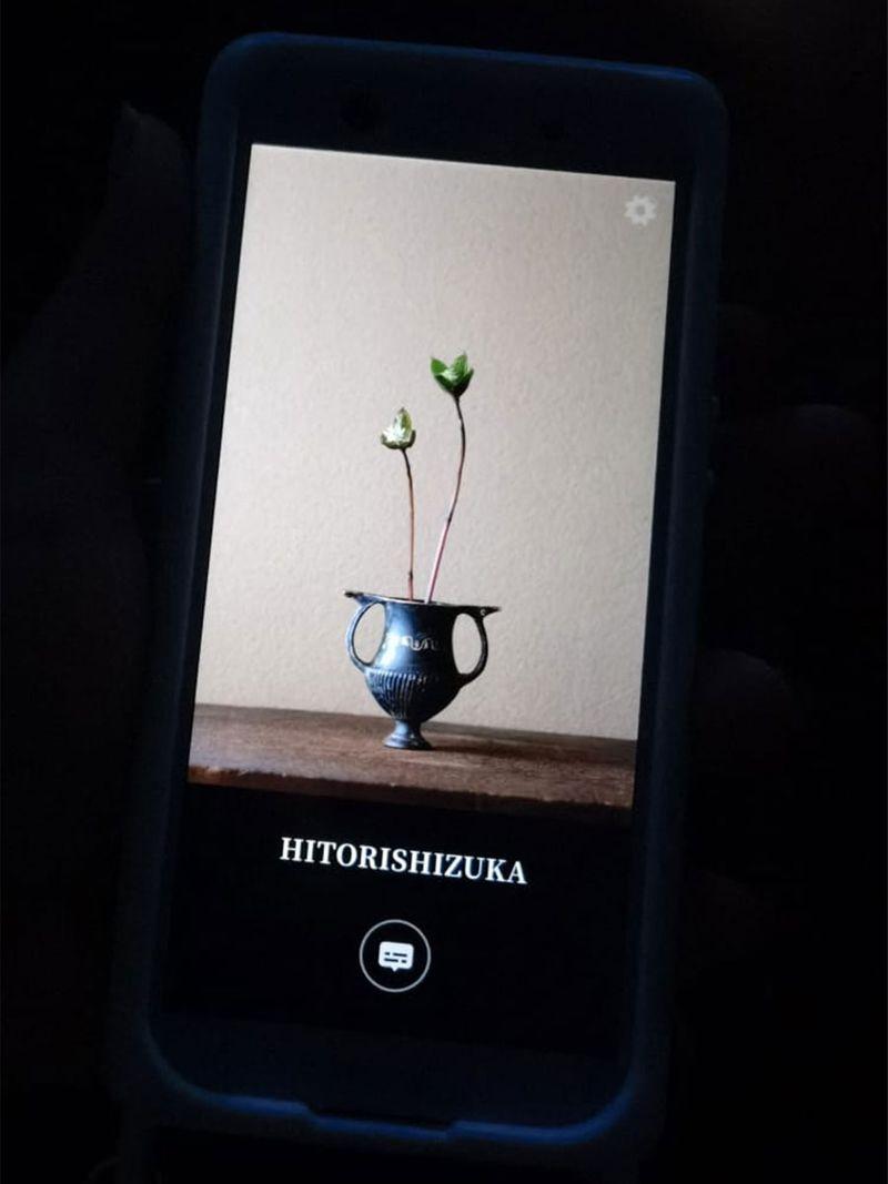 A single flower stem in a vase symbolizes hospitality