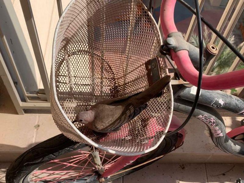 bird-basket-1632745946944