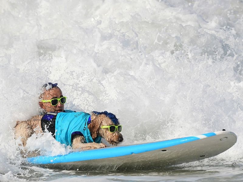 Surf dogs gallery