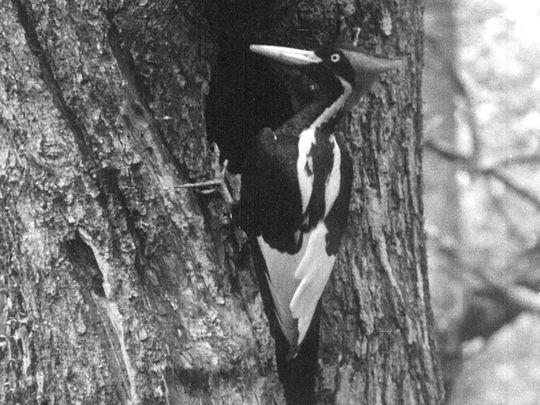 woodpecker-1-1632904103900
