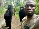 gorilla congo