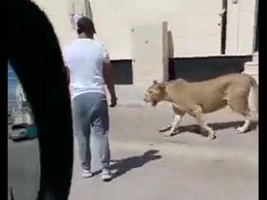 REG LION