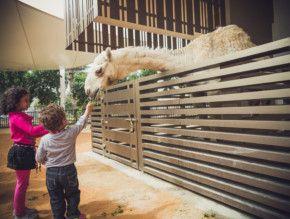 UAEP Animal barn - feeding2-1634114006994