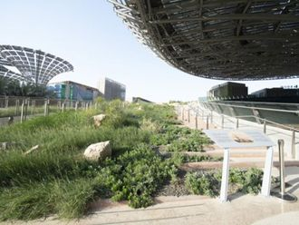 RDS_211021 Expo 2020 Flora 4-1634973822396