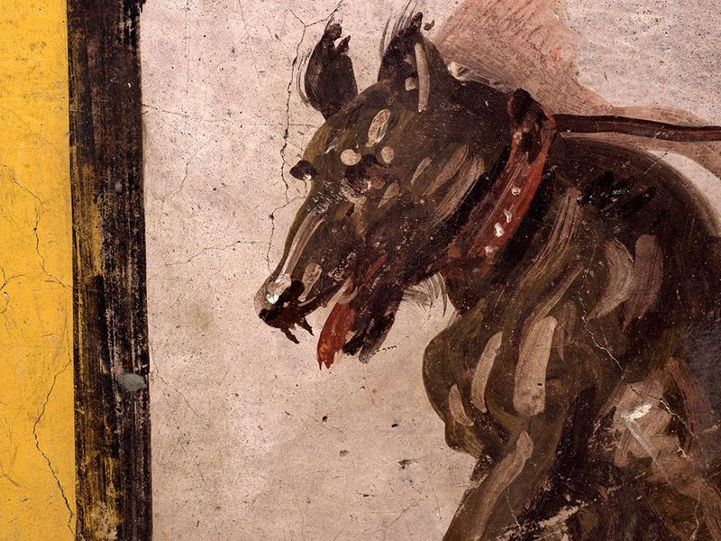 A fresco on an ancient counter depicting a dog on a leash that was uncovered during excavations in Pompeii.