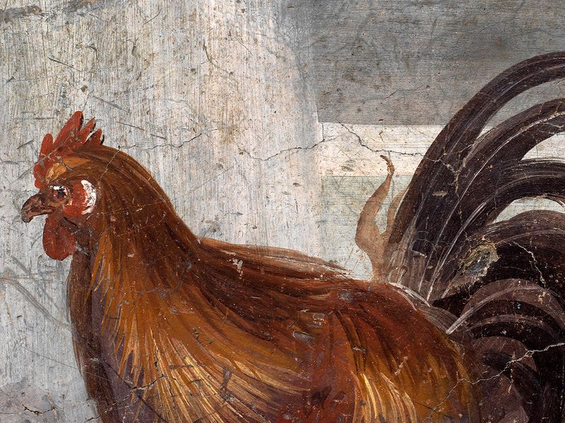 A fresco on an ancient counter depicting a rooster that was uncovered during excavations in Pompeii.