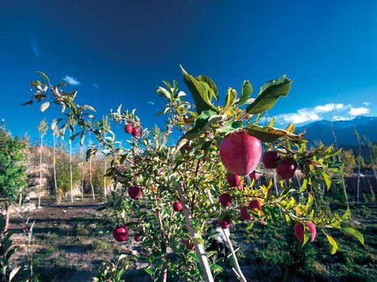 J&K-delegates-lead-apple-orchard-Kashmir-FOR-WEB