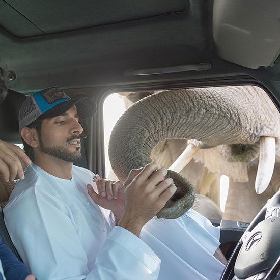 In photos: All the times Sheikh Hamdan showed us his animal friends    Lifestyle-photos – Gulf News