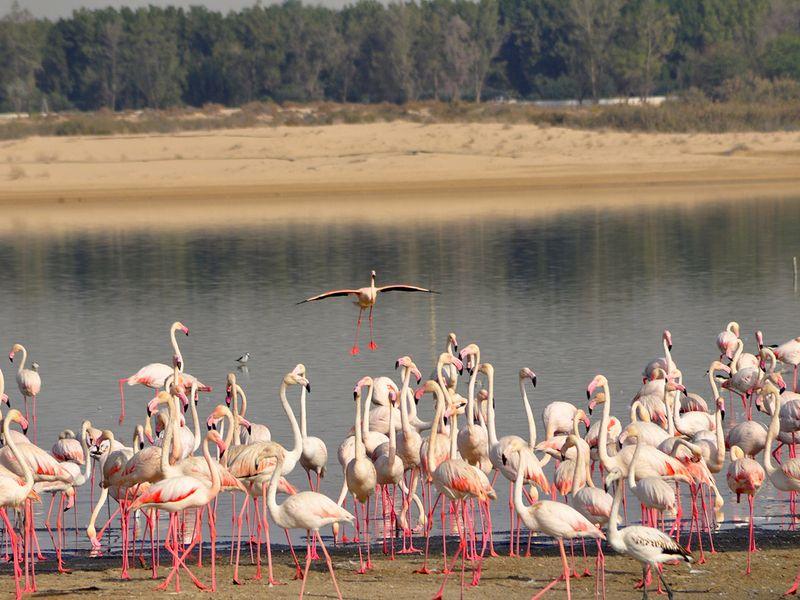 Al Wathba Wetland Reserve-1609310156249