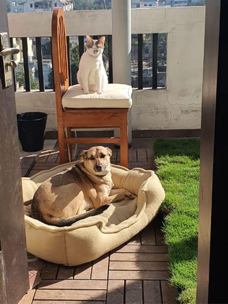 Smita Aloni's pets Kitty and Chikoo